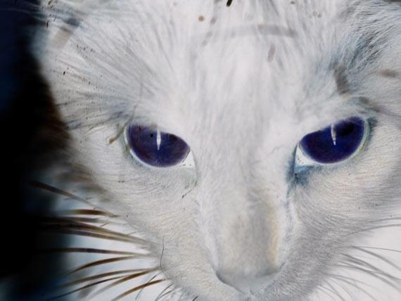 რას ხედავენ კატები, ძაღლები და სხვა ცხოველები ისეთს, რაც ადამიანისთვის უხილავია?