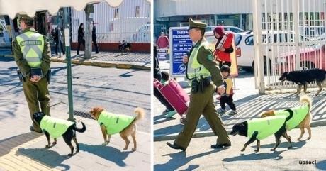 ჩილეში უპატრონო ძაღლებს სამსახურით და საცხოვრებელი ადგილით უზრუნვეყოფენ