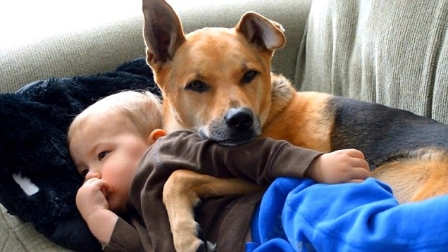 """""""მიკვირდა სხვა მშობლების, რომლებსაც ბავშვებთან ერთად სახლში ძაღლიც ჰყავდათ..."""" (+ვიდეო)"""