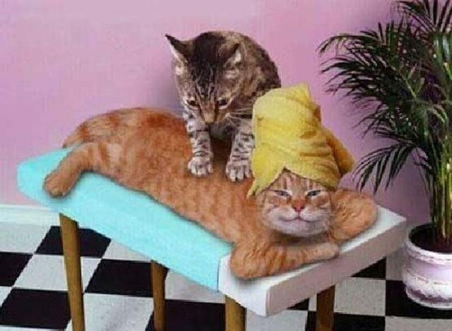 """რას ნიშნავს, როდესაც კატა წინა თათებით """"მასაჟს აკეთებს"""""""