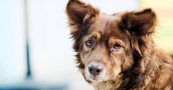 მეცნიერები ცდილობენ ამუშავდეს კანონი, რომლის დახმარებითაც ცხოველთა უფლებები გათანაბრებული იქნება ადამიანის უფლებებთან