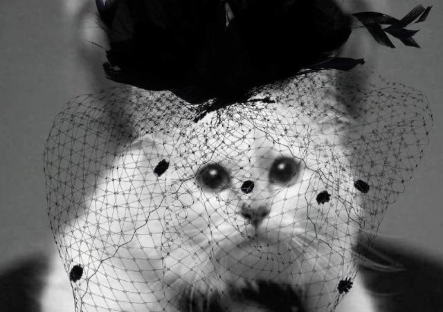 კარლ ლაგერფელდის კატამ, დიზაინერის საპატივცემულოდ,  სამგლოვიარო კოლექცია შექმნა