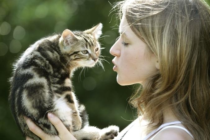 კატას პატრონი არ სჭირდება