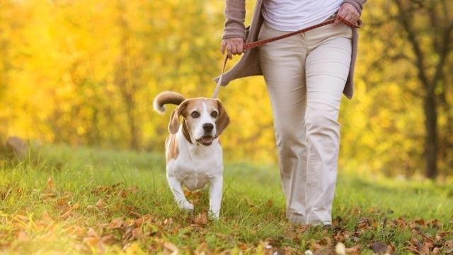 წესები, რომლებიც უნდა დავიცვათ ძაღლის სეირნობისას