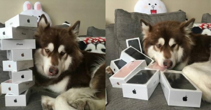 ბიჭმა თავის ძაღლს რვა iPhone 7 უყიდა! - რატომ?!