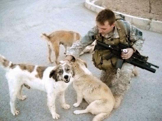 სამმა ძაღლმა 50 ჯარისკაცის სიცოცხლე იხსნა თვითმკვლელი ტერორისტისგან, თუმცა, გაუთვალისწინებელი რამ მოხდა... (+ვიდეო)