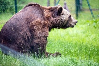 ტყეში მშვიდად მძინარე ტურისტ ქალბატონს უეცრად ფეხში კბილებით დათვი ჩააფრინდა...