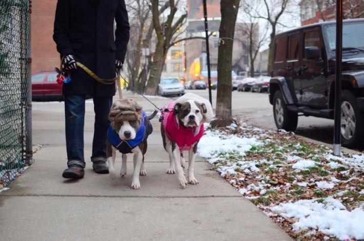 აშშ-ს საუკეთესო ქალაქები ძაღლების მფლობელთათვის (I ნაწილი)
