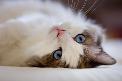 10 რამ, რაც კატას პატრონისგან არ მოსწონს