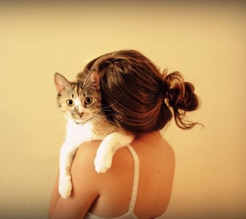 ის ადამიანები, ვისაც კატები უყვარს