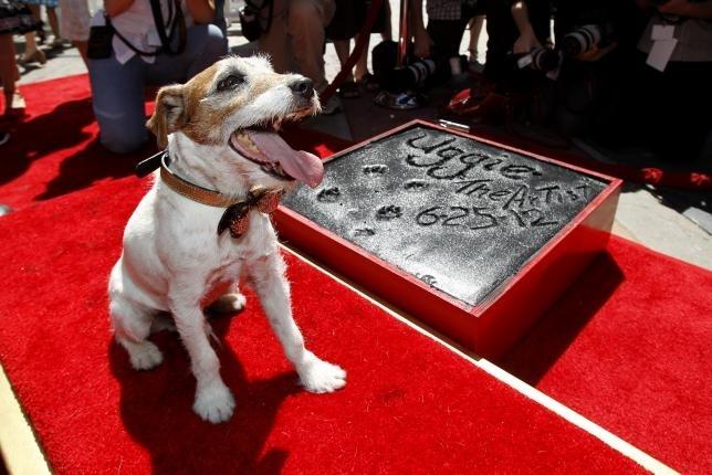ჰოლივუდის მსახიობი ძაღლი, სახელად უგი, 13 წლის ასაკში გარდაიცვალა