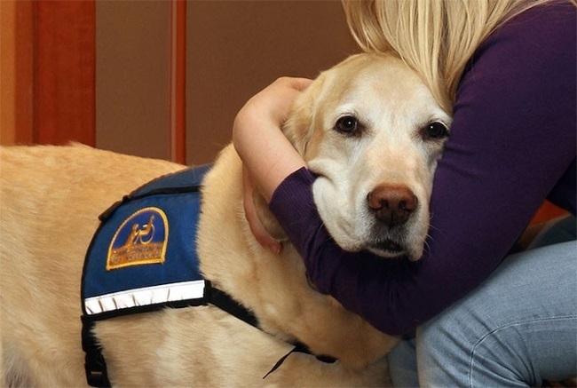 ძაღლები სასამართლო დარბაზში: ოთხფეხა ფსიქოლოგები, რომლებთან ერთადაც ყველა შიში დაძლეულია (+ვიდეო)