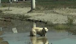 კაცმა თეთრი გერმანული ნაგაზი შუა უდაბნოში გამავალ ტრასაზე ჩამოსვა და წავიდა.. ძაღლი ჯერ კიდევ ვერ ხვდებოდა, რომ პატრონმა ის სასიკვდილოდ გაწირა.. (+ვიდეო)