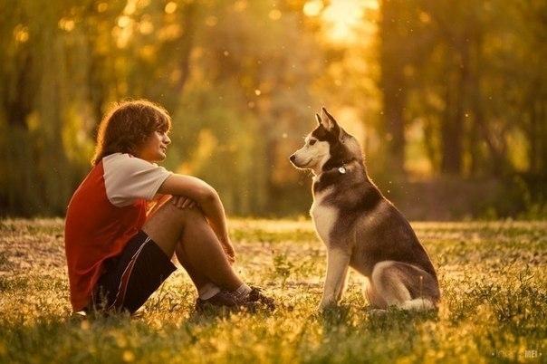 ძაღლის ენა – პირველი გაკვეთილები