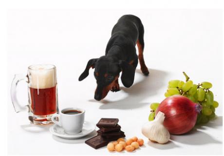 სპეციალისტებმა ძაღლებისთვის სასიკვდილოდ საშიში პროდუქტები დაასახელეს