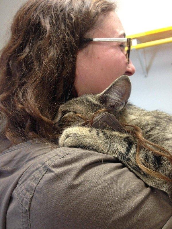 კატა, რომელიც თავშესაფრიდან აიყვანეს, პატრონს ჩაეხუტა.. შემდეგ რაც მოხდა, გარდაუვალი იყო...