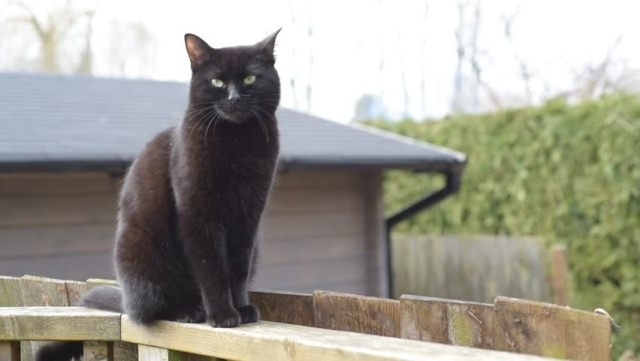 რატომ მიდის კატა უცხო ოჯახის კართან: მიზეზი და მინიშნება
