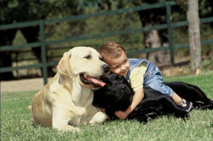 როგორ უნდა მოვიქცეთ, თუ ბავშვს ძაღლების შიში აქვს?