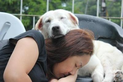 ის რაც ყველა ძაღლის პატრონმა უნდა იცოდეს