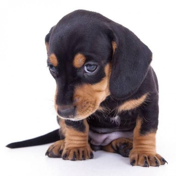 ნევროზი ძაღლებში პატრონის ქცევებზეა დამოკიდებული