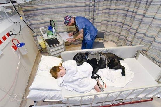 ძაღლი თავის პატარა მეგობარს საავადმყოფოში მარტოს არ ტოვებს
