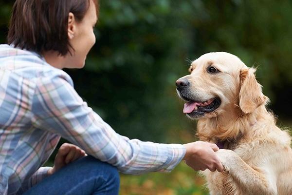 ჭკვიანი ძაღლის 7 თვისება