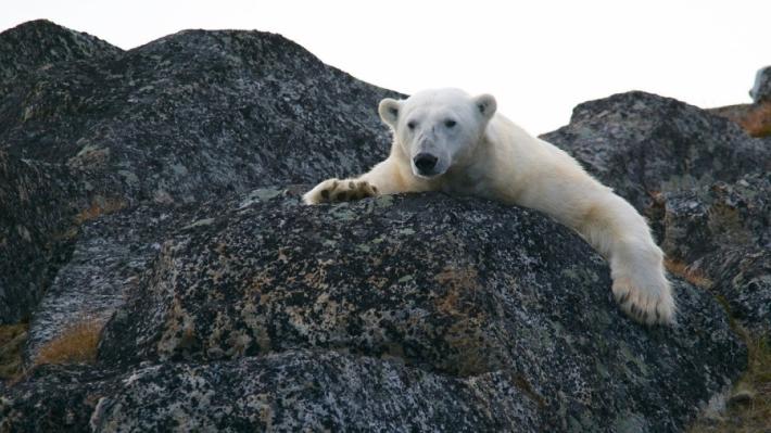 გლობალური დათბობა ცხოველების გადაშენების პროცესს დააჩქარებს