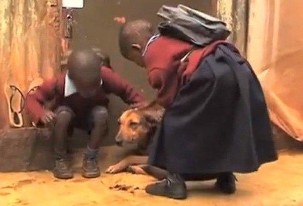 ძაღლი დედისგან მიტოვებულ ბავშვებზე ზრუნავს (+ვიდეო)
