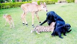 სხვადახვა სახეობის ცხოველი და მათი ერთი მშობელი