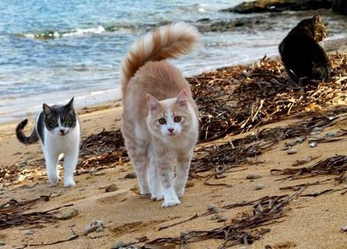 """იტალიაში მდებარე """"კატების კუნძული"""", ტურისტებისთვის ერთ-ერთ საუკეთესო ადგილად დასახელდა"""