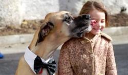 რატომ ლოკავს ძაღლი პატრონს?
