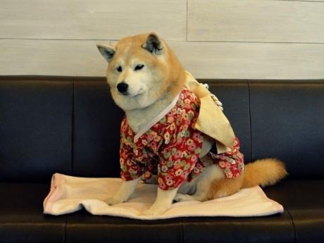 """იაპონიაში """"მოხუცებულ"""" ძაღლთა თავშესაფარი გაიხსნა"""
