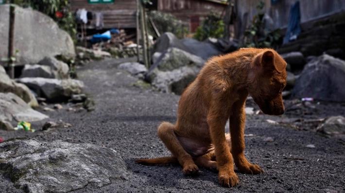 მადრიდში  ძაღლის მიტოვებისთვის პატრონი 30 ათას ევროს გადაიხდის