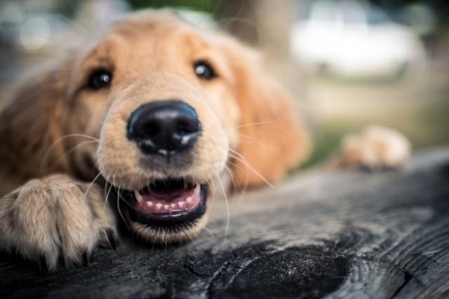 ძაღლებს შეუძლიათ ღიმილი