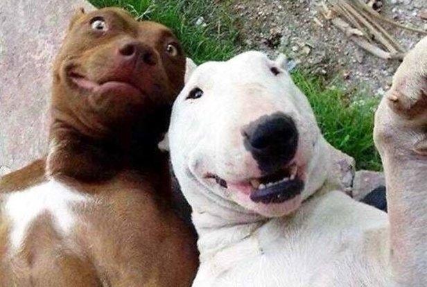 ცხოველების ტოპ 10 ყველაზე დასამახსოვრებელი სელფი (+ფოტო)