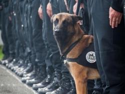 საფრანგეთში ანტიტერორისტული სპეცოპერაციის დროს პოლიციელი ძაღლი დაიღუპა