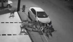 უპატრონო ძაღლების ხროვამ მამაკაცს მანქანა დაუმტვრია (+ვიდეო)