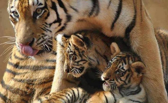 ეს საოცარი ამბავი ამტკიცებს, რომ ცხოველთა მადლიერება არსებობს და ის ბევრად ძლიერია ადამიანის მადლიერებაზე!