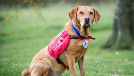 მოკვდა ძაღლი, რომელსაც ყნოსვით კიბოს დიაგნოსტირება შეეძლო