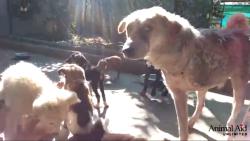 ლეკვებმა ინვალიდ ძაღლს სიცოცხლის ხალისი დაუბრუნეს (+ვიდეო)