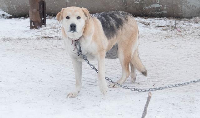 აშშ-ში კანონი გამკაცრდა იმ პატრონების მიმართ, ვინც შინაურ ცხოველს ყინვასა და სიცივეში ქუჩაში დატოვებს