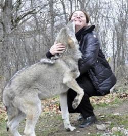 """""""მგელი იდგა და თვალებში მიყურებდა"""" - საოცარი ამბავი, რომელიც ქართველ ჟურნალისტს ტყეში შეემთხვა"""