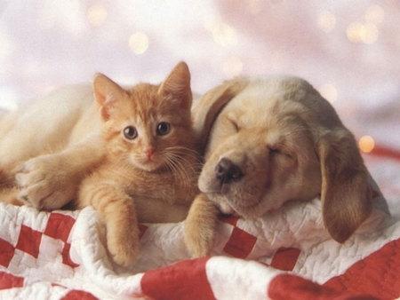 რატომ მტრობენ ძაღლები კატებს?