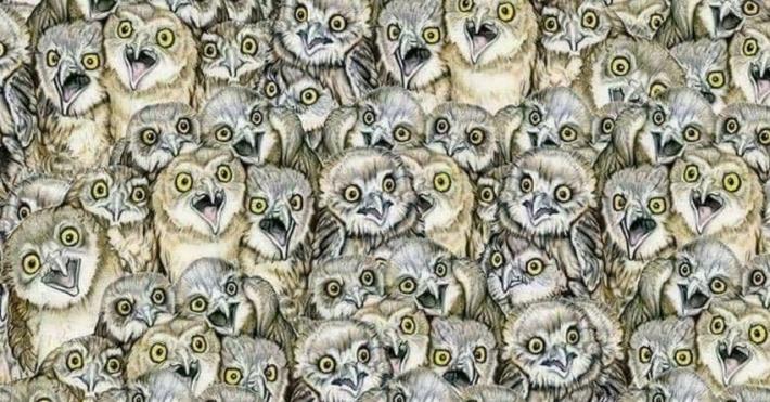 რთული თავსატეხის მოყვარულთათვის: იპოვეთ ერთადერთი კატა ათობით ბუს შორის