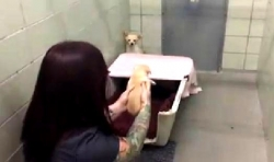 დედა ძაღლი არ ენდო ადამიანებს, სანამ მას თავისი ლეკვები არ დაუბრუნეს… (+ვიდეო)