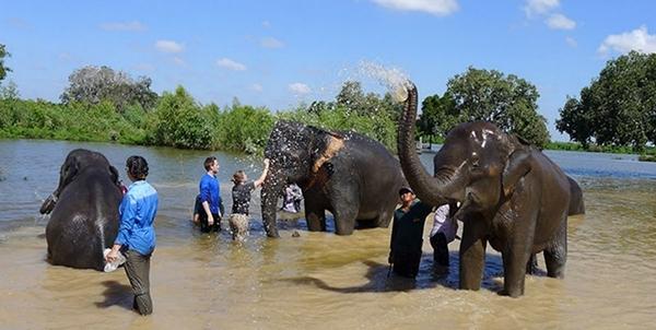 თქვენ შეგიძლიათ ტაილანდს უფასოდ ესტუმროთ, თუ აზიური სპილოების გადარჩენაში მონაწილეობას მიიღებთ