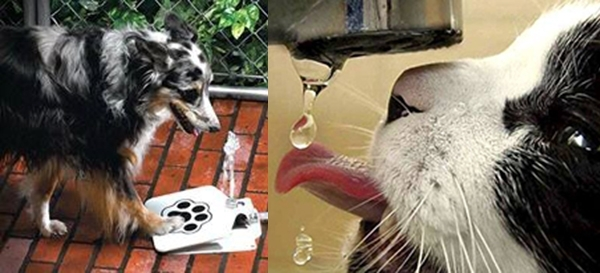 როგორ დავეხმაროთ ცხოველებს ზაფხულის გაუსაძლის სიცხეში