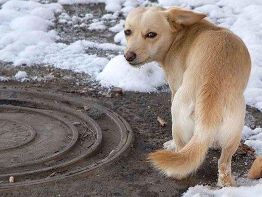 ვიღაცისთვის მაწანწალა ძაღლია, ხოლო ვიღაც სიკვდილისგან იხსნა