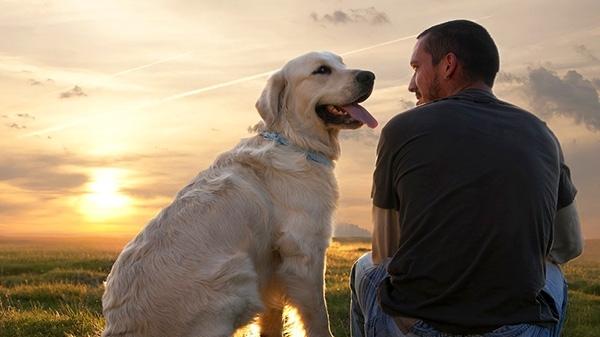 ცხოველები ადამიანებს მარტოობისა და შფოთვის დროს ეხმარებიან