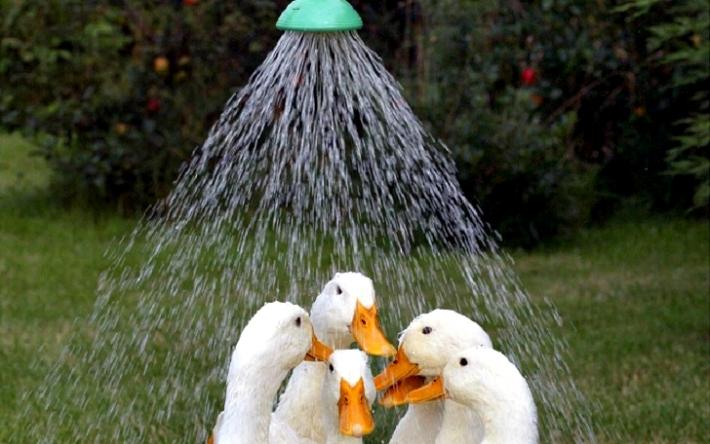 ნაბიჯით იარ შხაპისკენ! (+ფოტო)